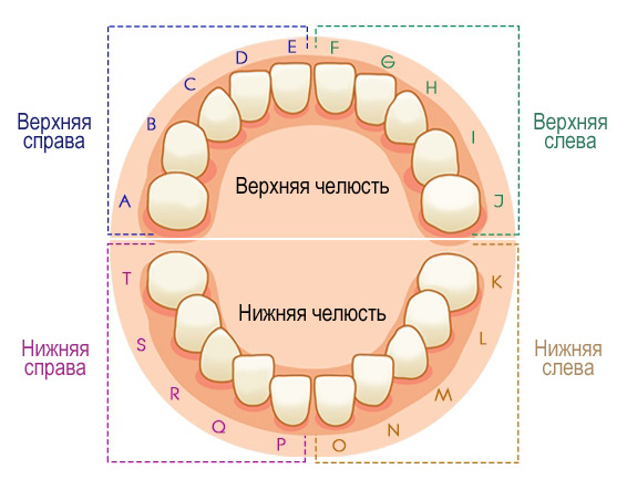 Схема нумерации молочных зубов